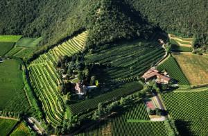 Panoramica deo vigneti Castello Bonomi e il Monte Orfano